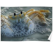 Ghost Crab I Poster