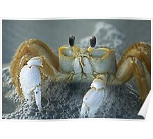 Ghost Crab II Poster
