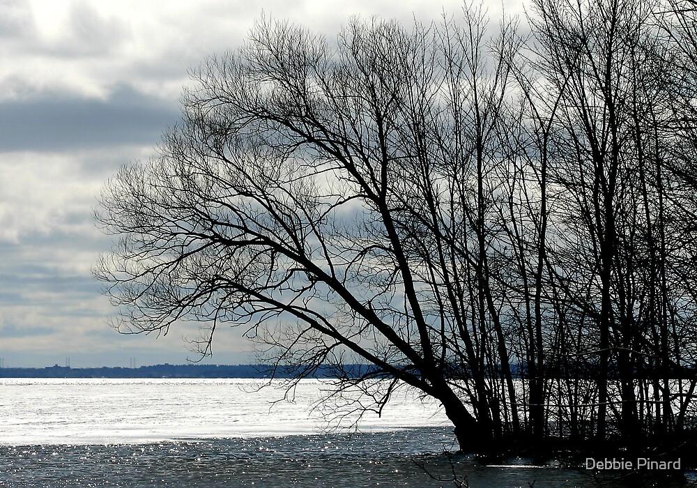 Tree in Spring - Ottawa River by Debbie Pinard