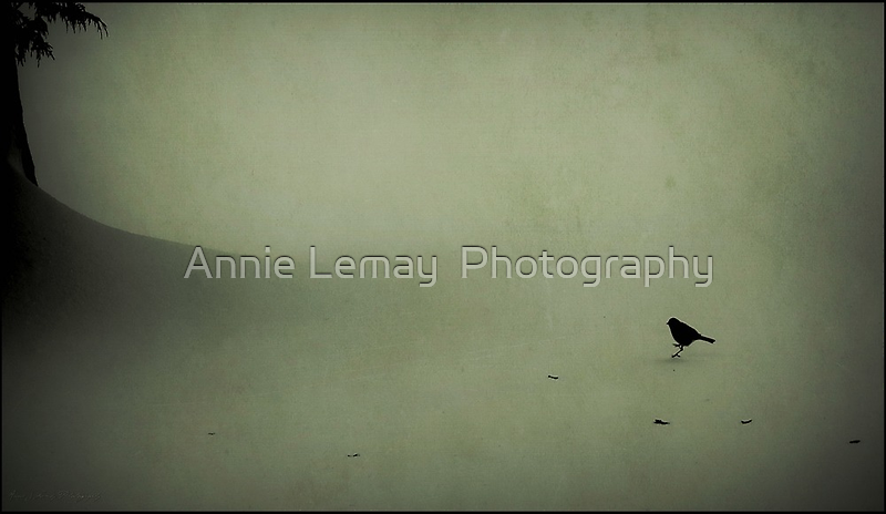 Snow Bird by Annie Lemay  Photography