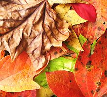 autumn leaves by SusieG
