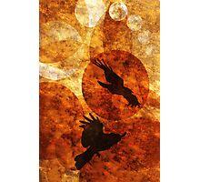 Fly Black Birds Photographic Print