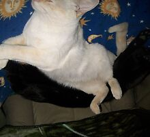 When Cats Dream by BingoStar