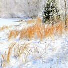Peaceful Snow Scene by NatureGreeting Cards ccwri