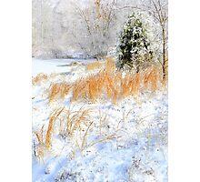 Peaceful Snow Scene Photographic Print