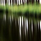1 row of trees.... by ansiezdutoit