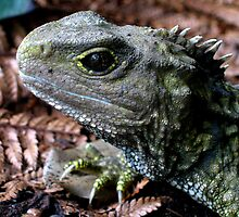 """Pretty old """" Tuatara """" by pic4you"""