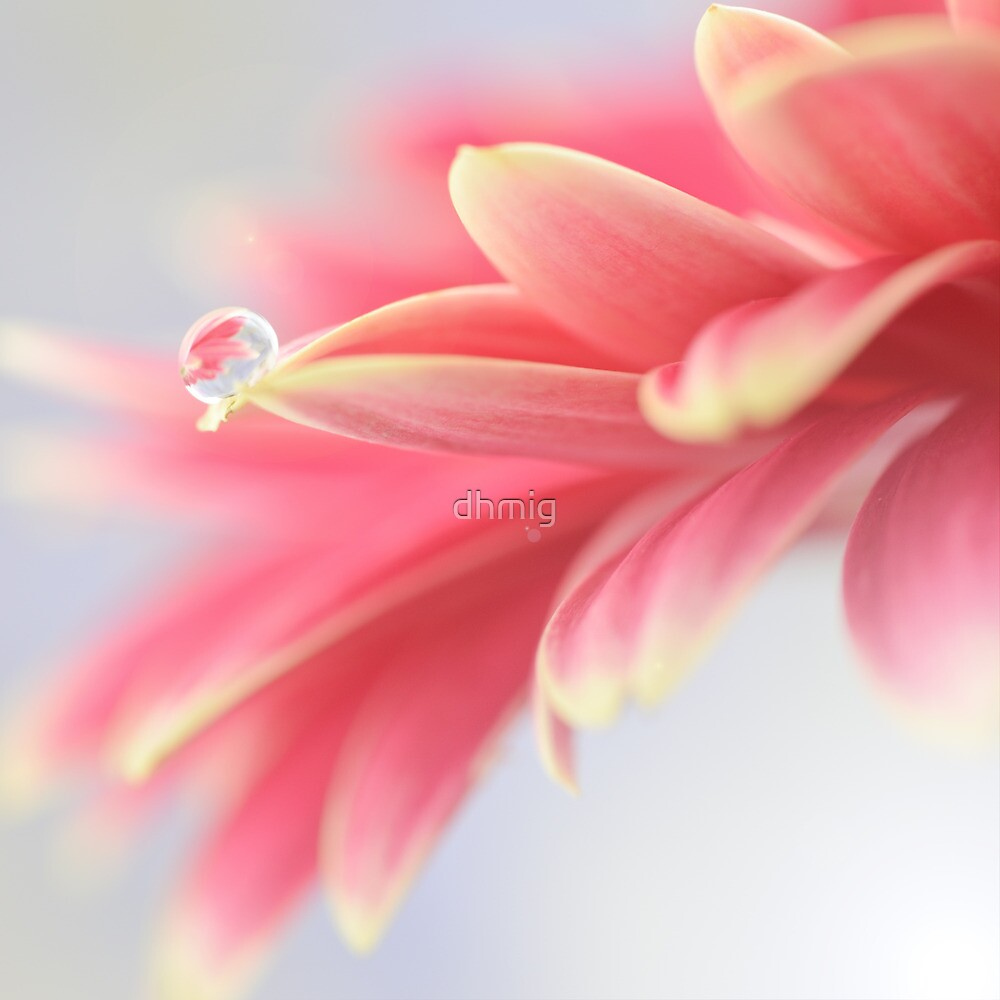 Pink droplet by dhmig