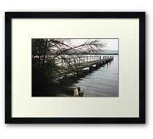 Casuarina Screen Framed Print