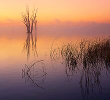 Misty dawn - Lake Mulwala by Hans Kawitzki