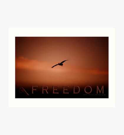 Freedom 2 © Vicki Ferrari Photography Art Print