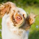 Italian Spinone Shake with Bubbles! by heidiannemorris