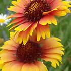 Blanket Flower by Tracy Faught