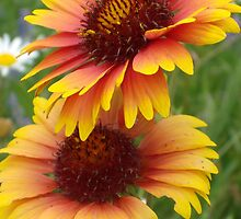 Blanket Flower by Tracy Wazny