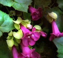 Pink Trumpets by RC deWinter