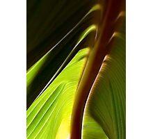 Banana Leaf Cabana Photographic Print