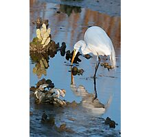 Great White Egret at Dusk Photographic Print