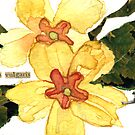 Primula Vulgaris (Primrose) by Carol Kroll