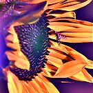 Sun On The Sunflower Gone Wild by KatsEye
