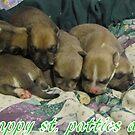 jerzy's pups by gabbielizzie