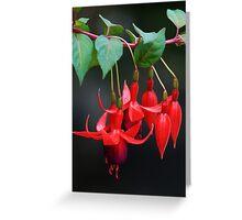 Fuschia Blossoms Greeting Card