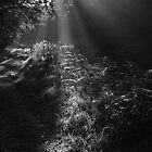 Sun ray by AlanPee