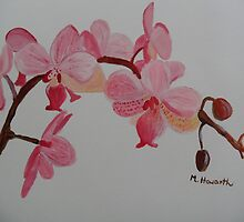 Orchids by Monika Howarth