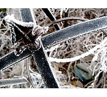 Frosty Spike Photographic Print