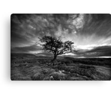 The Wiley Windy Moors Canvas Print