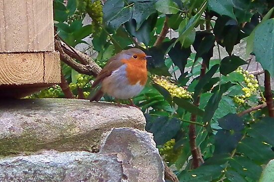 Puffed Up Robin by lynn carter