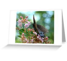 Black Swallowtail on Abelia Greeting Card