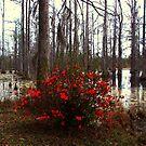 Red bush in the swamp by Susanne Van Hulst