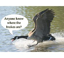 Bird Brakes Photographic Print