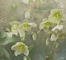 Brian travelled through the valley of the Hellebores... by polly470