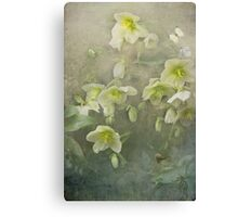 Brian travelled through the valley of the Hellebores... Canvas Print