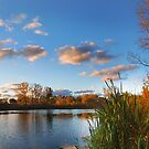 Paint The Sky With Autumn by Curtiss Simpson