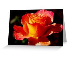 Bright Rose Greeting Card