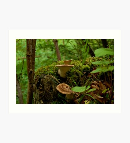 Scottish Shelf Mushrooms Art Print
