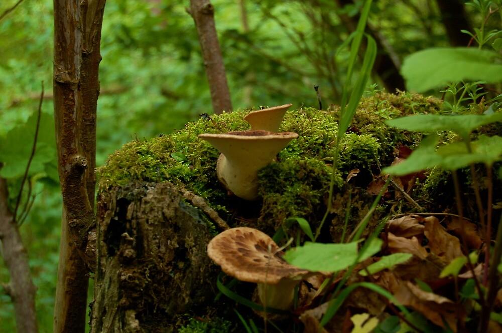 Scottish Shelf Mushrooms by ScottishVet