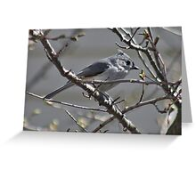 Tufted titmouse in a tree Greeting Card