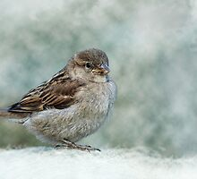 Sparrow by Lifeware