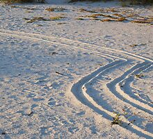 Wheelchair tracks on the beach by Ben Waggoner