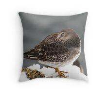 Purple Sandpiper in the Snow - Gloucester, Massachusetts Throw Pillow