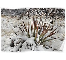 Blanketed with Snow Poster