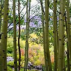 Color Through the Aspens by Ken Fleming