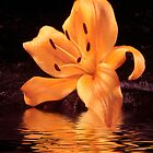 Orange Lily by Sheryl Kasper