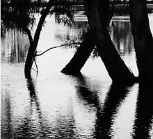 Flooding the black trees by Kris K & R Photography