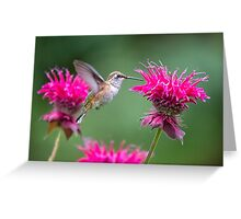 Hummingbird at the Bee Balm Greeting Card