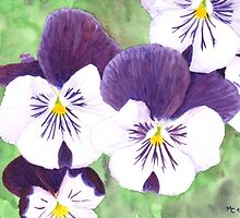 White and purple Pansies flowers by savousepate