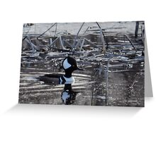 Lonely Male Hooded Merganser Greeting Card